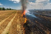 Crop destroyed due to Fire